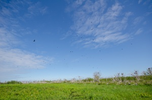 A wide-angle shot showcasing the landscape of Governor's Island. Note the several cormorants flying overhead.