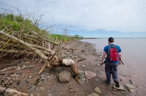 NCC biologist, Mitchell MacMillan, walks along the shoreline of Governor's Island. Notice the grey boulders scattered about. These rocks are old, much older than most of the rock on PEI, and are of similar composition to rocks found on mainland Nova Scotia. This is evidence that Governor's Island - and by extension PEI - was once connected to the mainland, but broke off eons ago.