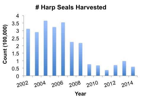harp seal harvest